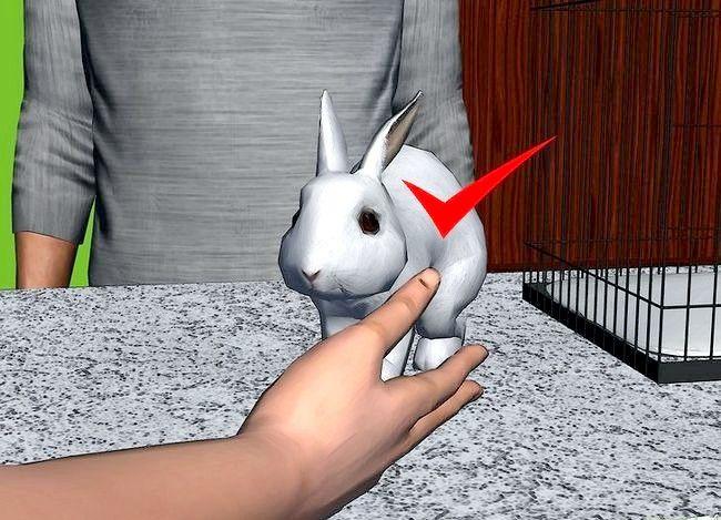 Prent getiteld Kies `n Toon Rabbit Stap 6