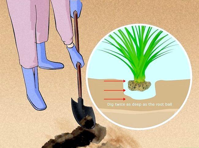 Hoe om sierplante te plant