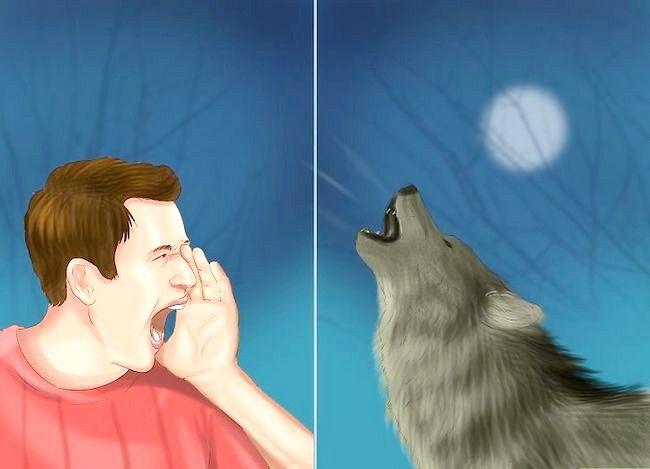 Prent Titel Oorleef Wolf Aanval Stap 12