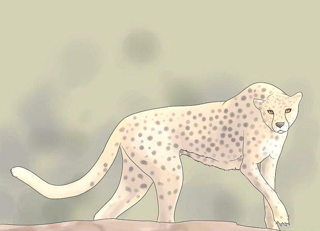 Prent getiteld Oorlewende Cheetah Attack Stap 2