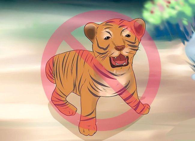 Prent getiteld Oorleef Tiger Attack Stap 9