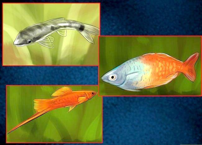 Prent getiteld Hou Peacock Eels Stap 11