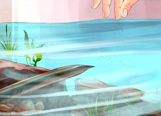 Prent getiteld Hou Peacock Eels Stap 12