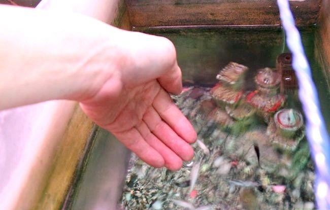 Prent getiteld `n Gesonde, gelukkige akwarium Stap 11