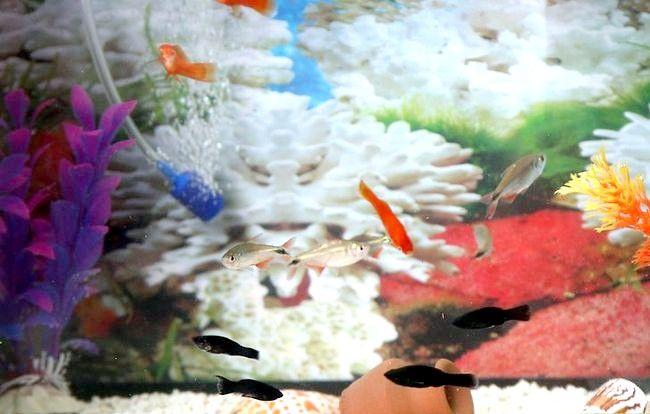 Prent getiteld `n Gesonde, gelukkige akwarium Stap 16