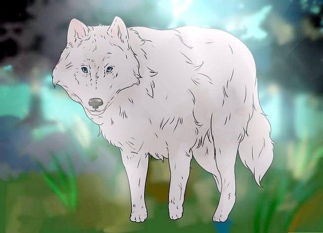 Prent getiteld Eie `n troeteldier Wolf Stap 4