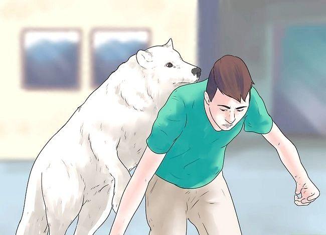 Prent getiteld Eie `n troeteldier Wolf Stap 7