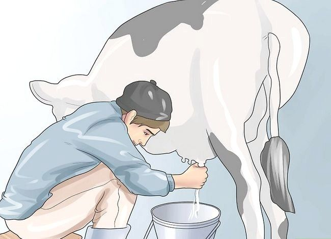 Prent getiteld `n troeteldier koei stap 15