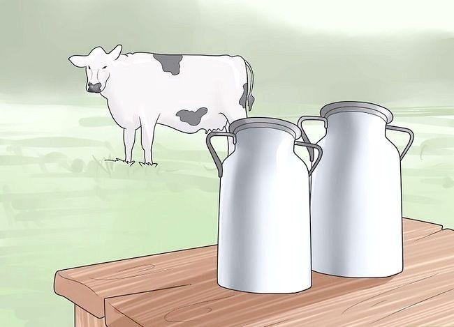 Prent getiteld `n troeteldier koei stap 2