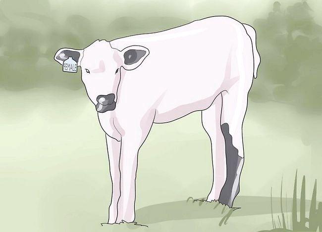 Prent getiteld `n troeteldier koei stap 3