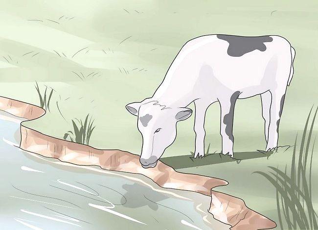 Prent getiteld `n troeteldier koei stap 10