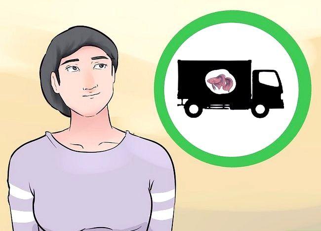 Prent getiteld Vervoer Vis Stap 1