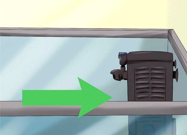 Prent getiteld Vervoer Vis Stap 21