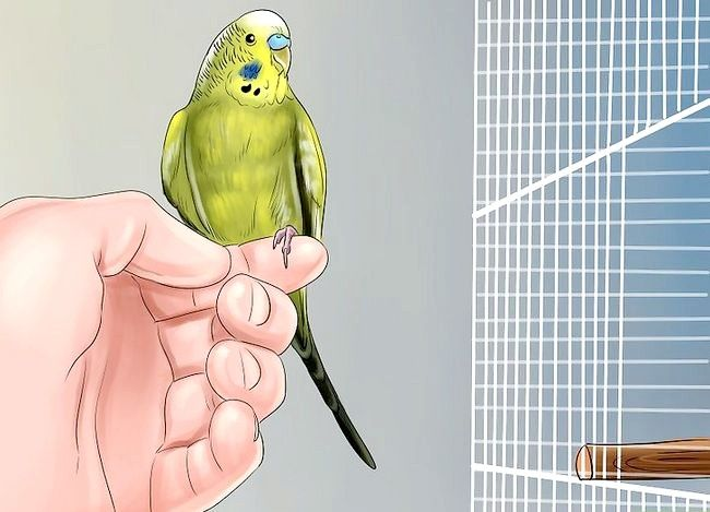 Prent getiteld Behandel Diarree in Parakeet Stap 9