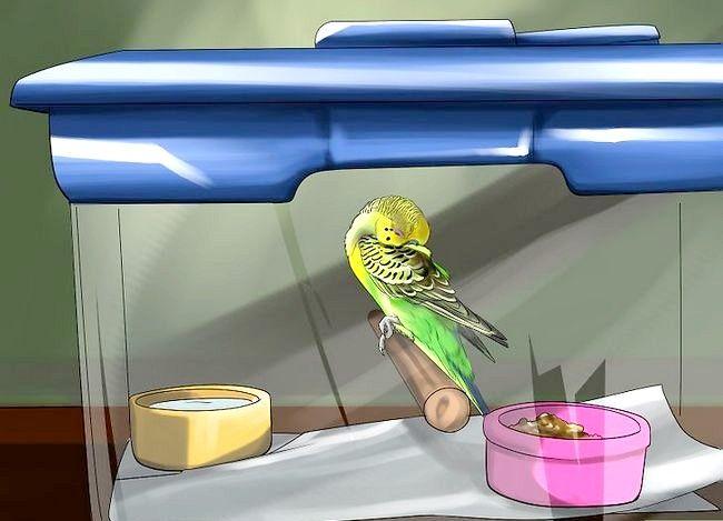 Prent getiteld Behandel Diarree in Parakeet Stap 1