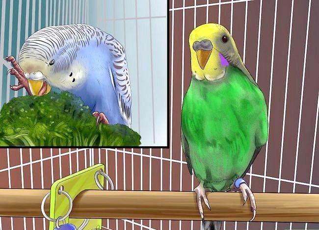 Prent getiteld Behandel Diarree in Parakeet Stap 5