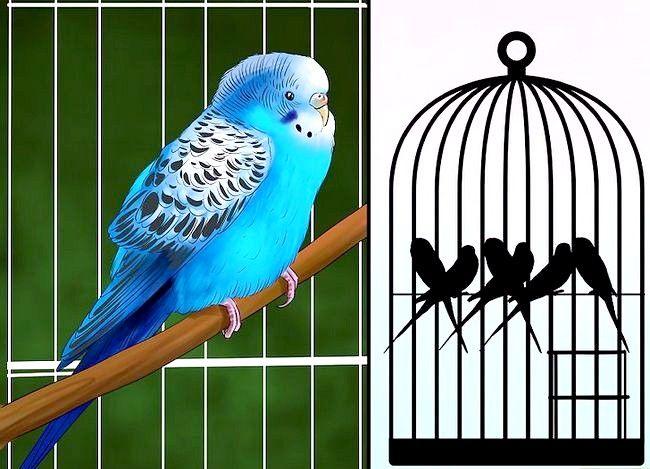 Prent getiteld Behandel Diarree in Parakeet Stap 6