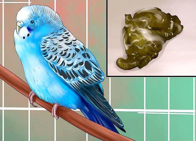 Prent getiteld Behandel Diarree in Parakeet Stap 7
