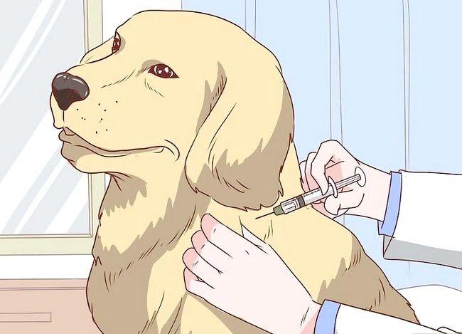 Prent getiteld Behandel `n hond byt Stap 9