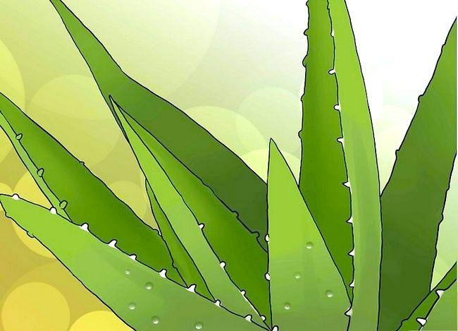 Hoe om aloe vera-blokkies te gebruik om `n sonbrand te behandel
