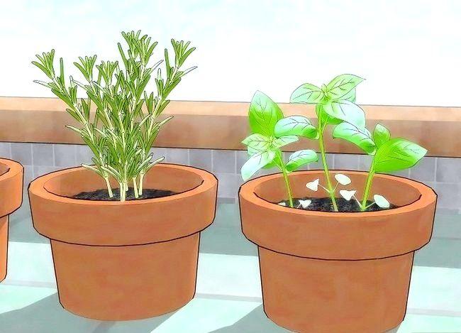 Prent getiteld Gebruik plante om muskiete weg te hou Stap 3