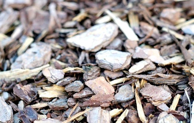 Prent getiteld Wood Chipped Mulch