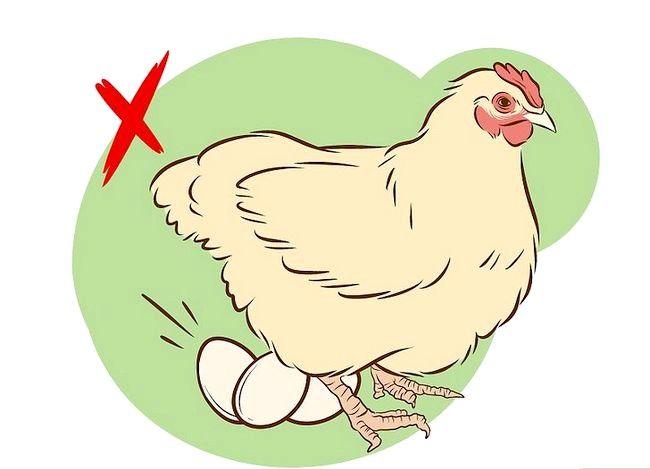 Prent getiteld Inenting Kippen Stap 2